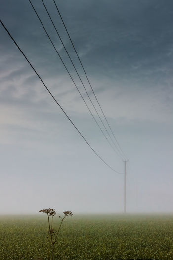 Cow parsley under the telephone line Atmosphere Atmospheric Mood Blue Cable Cloud Connection Cow Parsley Distant Environmental Conservation Finland Low Angle View Mist Outdoors Perspective Power Line  Sky Sunset Technology