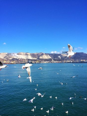 Flock Of Birds Blue Day Nature Water No People Animal Themes Sea Outdoors Beauty In Nature Clear Sky Animals In The Wild Mountain Sky Bird