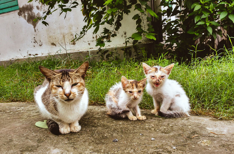 Cat family Animal Themes Domestic Cat Pets Domestic Animals Mammal Two Animals Cat Front View Zoology Animal Looking At Camera Green Color Sitting