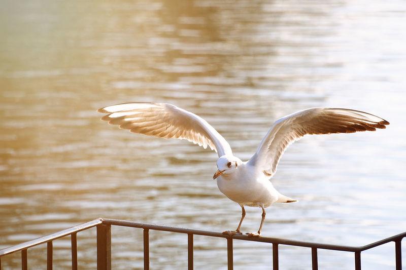 Bird Photography One Animal Animal Wildlife Spread Wings Nature Kew Gardens, London London
