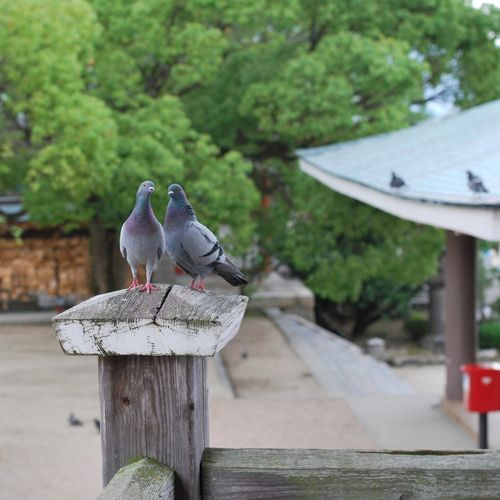 Bird Pigeon Landscape