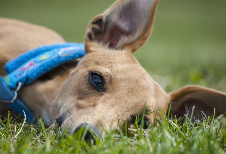 Close-up of dog on field