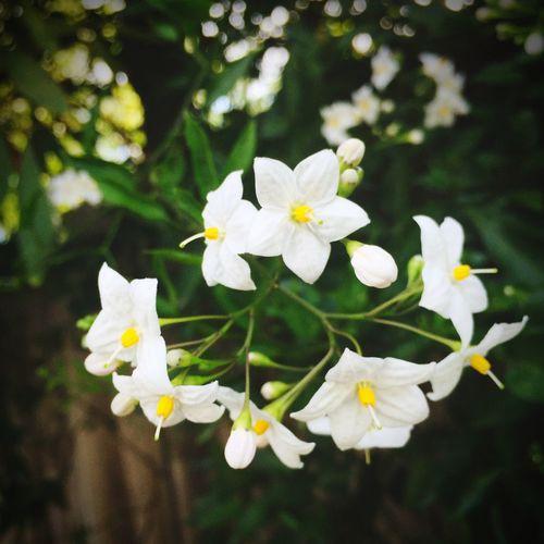Pretty little flower 🌸🍃🌸🍃🌸🍃🌸 WhileIwaswalking Nature Flower Flowers Littleflower Plant Summer Sidewalkflower 🌸🍃🌸🍃🌸🍃🌸