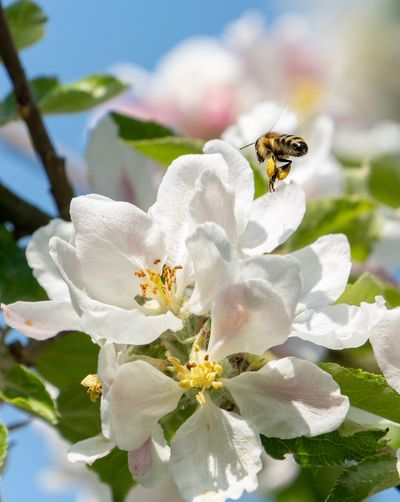 Bee l Hamburg