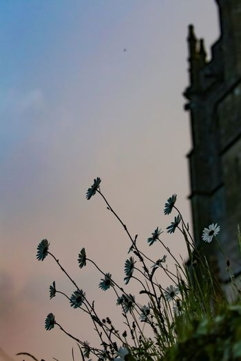 Another hazy sunset by the old church. Sunset Plant Sky Growth Low Angle View No People Tree Nature Beauty In Nature Flower Flowering Plant Silhouette Day Outdoors Fragility Tranquility Freshness Vulnerability  Built Structure Architecture