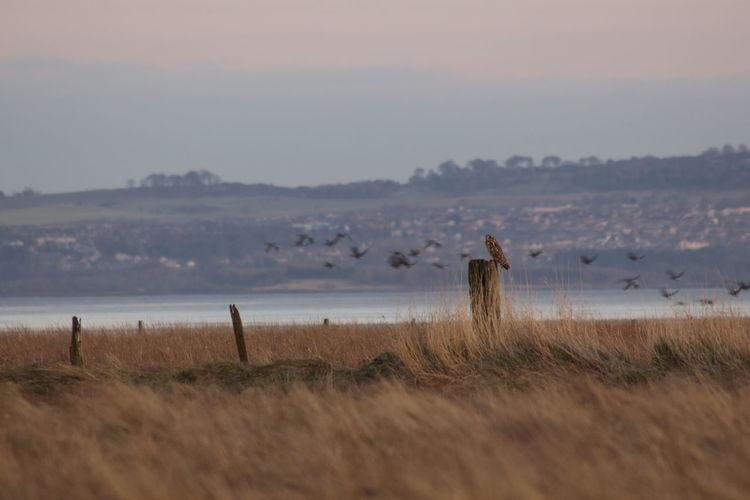 Owl On Wooden Post Against Birds Flying Above Lake
