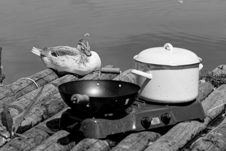 Lake And Duck In Front Of Cooking Utensils On Stove