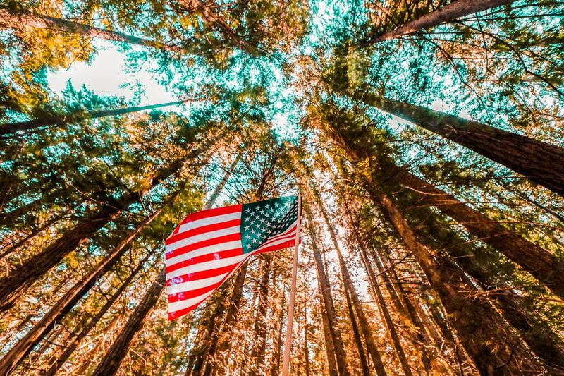 American Flag Trees And Sky Trees Forest