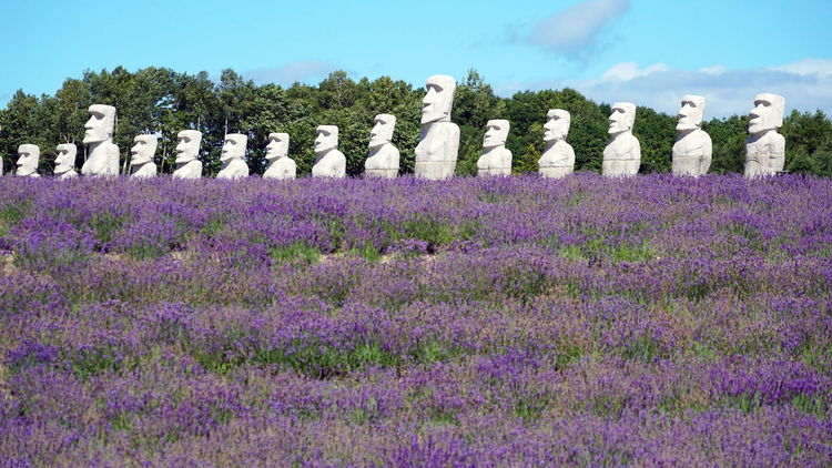 Cemetery Lavender Field Makomanai Takino Moai Art And Craft Flower Flowering Plant In A Row Land Lavender No People Outdoors Purple Sculpture Sky Stone - Object