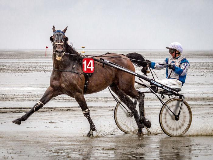 Adventure Animal Themes Horse Racing Seaside Traber Trotter Trotting Race Working Animal