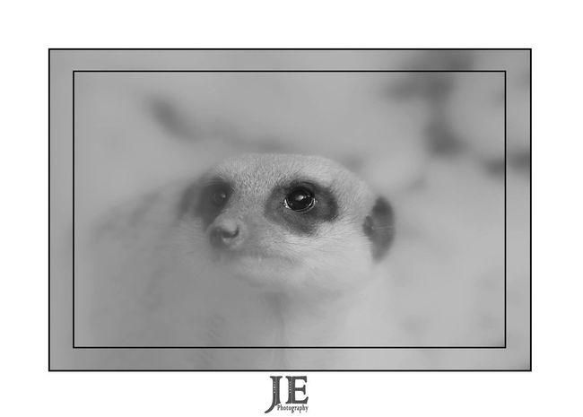 One Animal Animal Themes White Background No People Studio Shot Close-up Indoors  Mammal Day