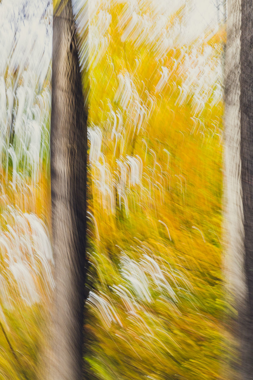 blurred motion, no people, motion, outdoors, day, nature, close-up