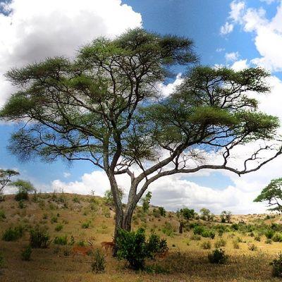 Tanagire Tanzania Africa Safari