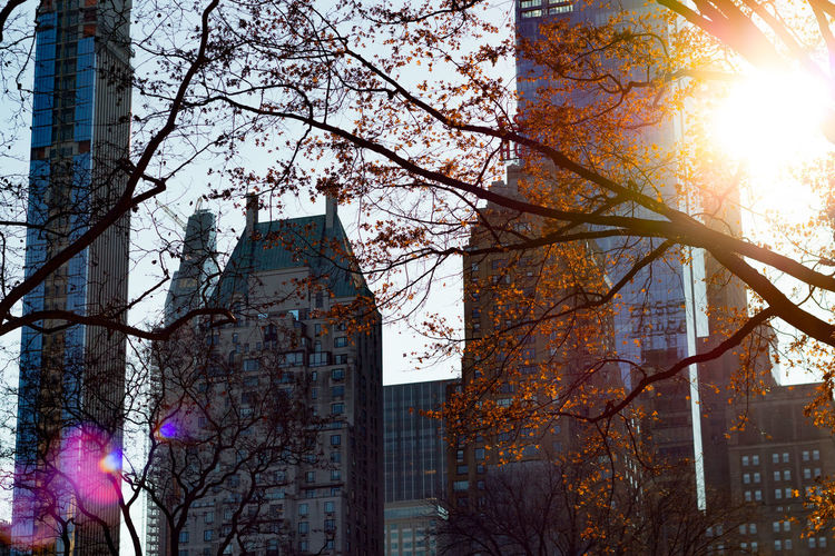 New York Leaves Tree Building Exterior Plant Built Structure Nature Sky Autumn Architecture Building Low Angle View Branch Sunlight Tree Trunk Trunk Day Change City No People Office Building Exterior Outdoors Lens Flare Skyscraper