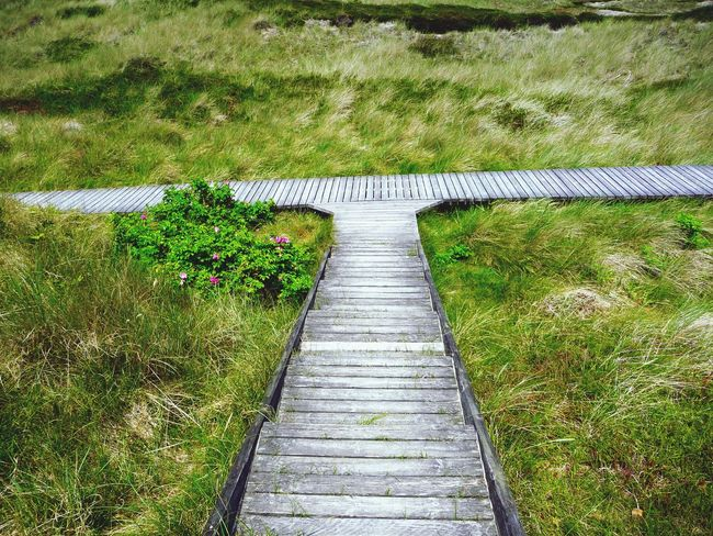 Learn & Shoot: Balancing Elements Path Pathway Pathways Northsea Amrum Direction Which Way? Track Walk This Way On The Way Right Or Wrong Right Now Turn Left Turn Right Path In Nature Paths Path To Nowhere