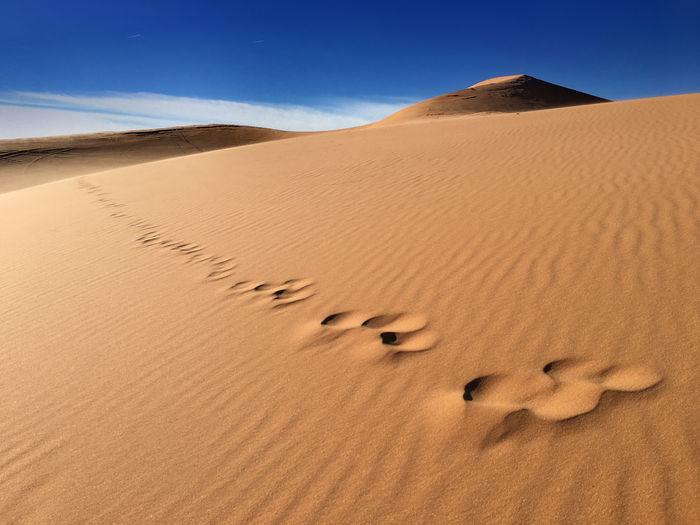 Land Landscape Desert Sand Scenics - Nature Sand Dune Environment Arid Climate Climate Sky Nature FootPrint Remote Animal Wildlife No People Animal Day Animal Themes Heat - Temperature Non-urban Scene Outdoors