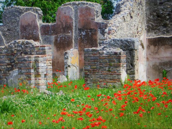 Architecture Beauty In Nature Building Exterior Built Structure Day Flower Flower Head Freshness Grass Growth Nature No People Outdoors Pompei Scavi Pompeii Details Pompeii Ruins Red
