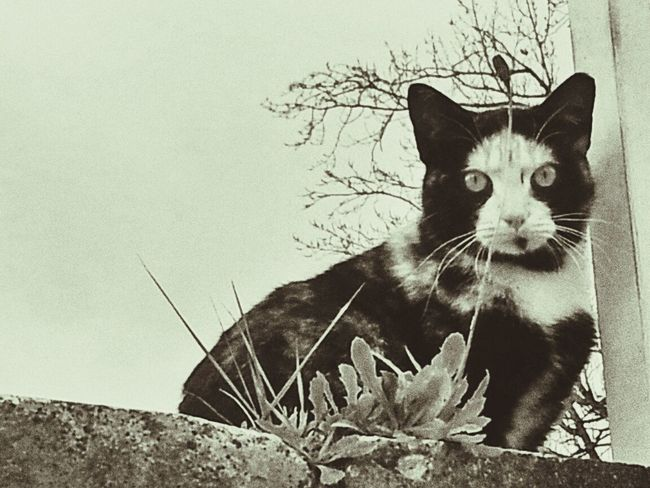 Cats Blackandwhite Lookin