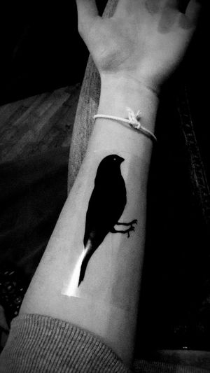 Birds on my arm