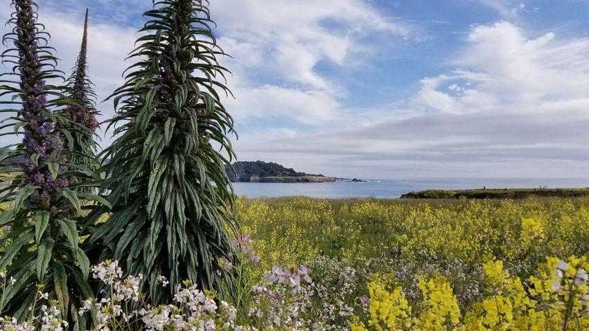 Mendo meadow. EyeEm Best Shots - Nature Flower Water Sea Sky Horizon Over Water Plant Wildflower Plant Life Growing