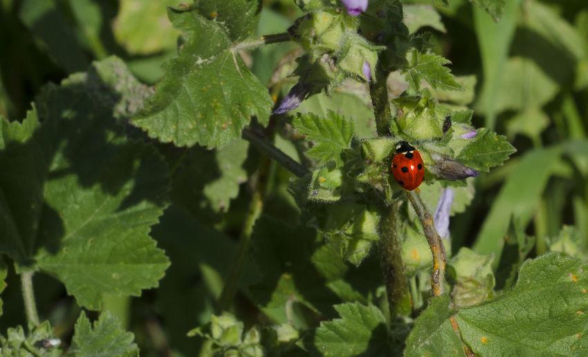 Close-up of ladybug on tree