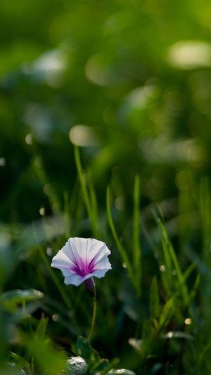 Flower Head Flower Plant Macro Macro Photography Macro_collection Macro Nature Macro_flower