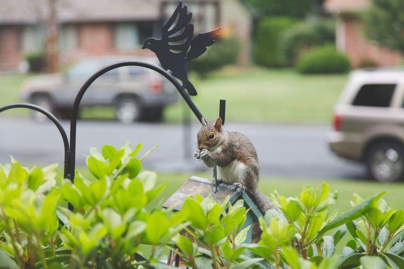 Squirrel on plant
