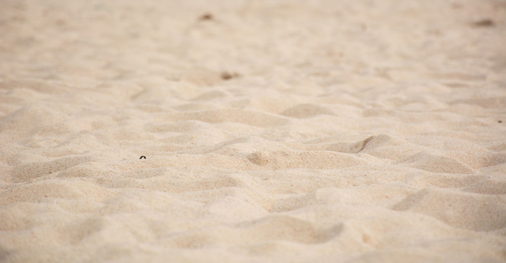 Animal Themes Animal Wildlife Animals In The Wild Beach Beach Sand Bird Close-up Day Nature No People One Animal Outdoors Park Sand Sand Beack Sand Park Sand Patterns Sand Texture Water