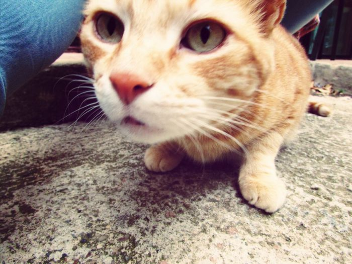 Petit Chat ! Cute Pets ❤️✌️