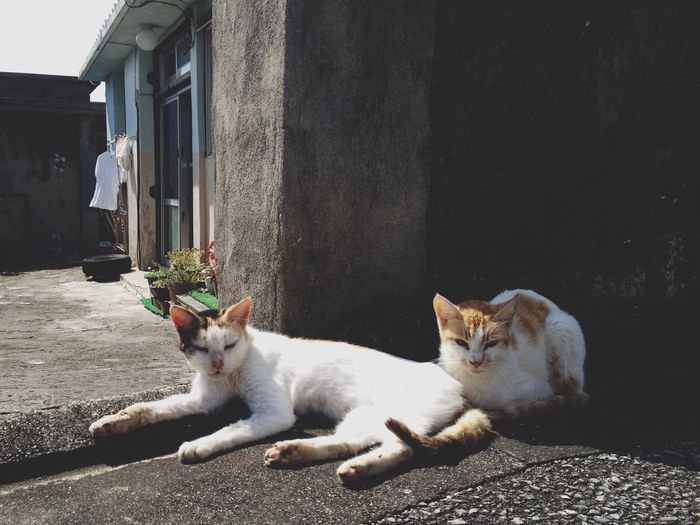 Cat Sitting On Street