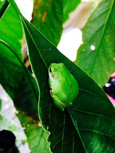 Flog Green Green Color Leaf Nature