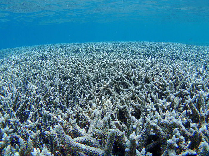 Blue Branch Coral Clarity Coral Landscape_Collection Nature_collection Sea Underwater Photography