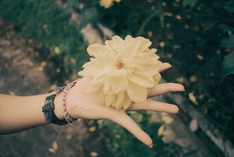 Olympus OM-1 Adult Beauty In Nature Close-up Day Filmphotography Filtered Image Flower Flower Head Focus On Foreground Freshness Holding Human Body Part Human Hand Lifestyles Nature One Person Outdoors People Plant Real People Rollei Vario Chr Women