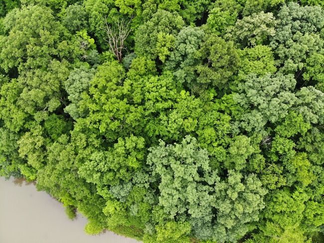 Mavic Air Tourism Destination Aerial View Aerial Shot Aeriel Photo Dronephotography Forest Forest Photography Treelines Green Color Trees Green Textured  Nature Photography Textures and Surfaces Nature Texture Tree Tops Harmony Peaceful Positive Pure Destinations Vistas Scene Leaves Sunshine Botanical