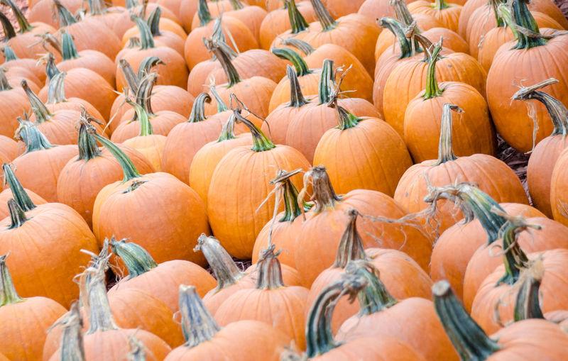 Full frame shot of pumpkins at farm