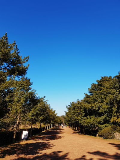 Footpath amidst trees against clear blue sky