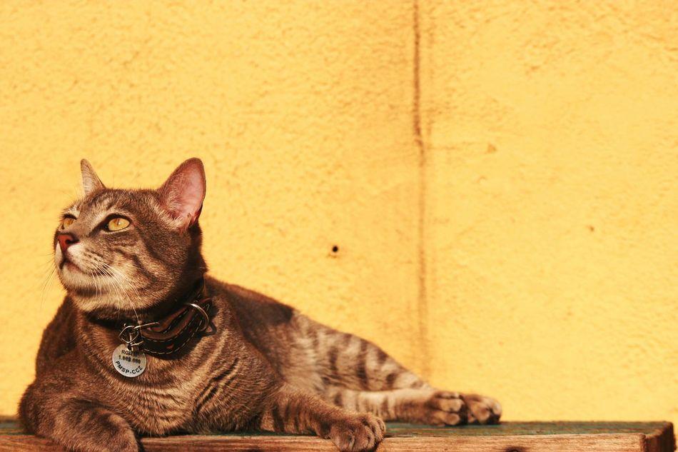 Faces Of Summer Cat Pets Sunbathing Sunset Cute Green Eyes