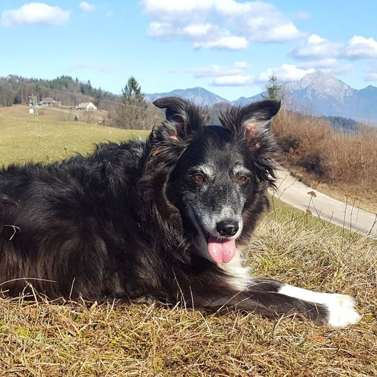 🐶🐶🐶mY beSt fRieNd🐶🐶🐶Boardercollie IFEELGOOD✌ IfeelsLOVEnia Mybestfriend Kriznagora Hiking Adventures Animal Themes Twigy 💪💪🌞🌞life Is Better In The MountainS🌞🌞💚💚 Julijske Alpe Nature Ilovemountains Alwaysthereforme