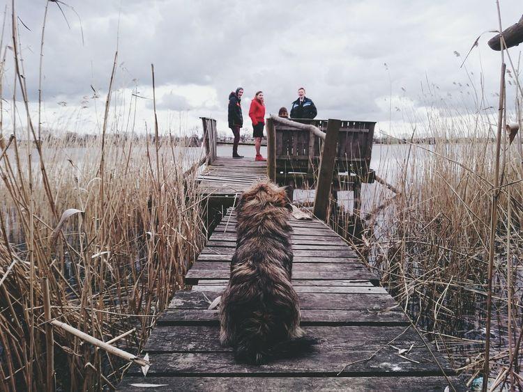 Waiting for children Dog Children Lake Pier