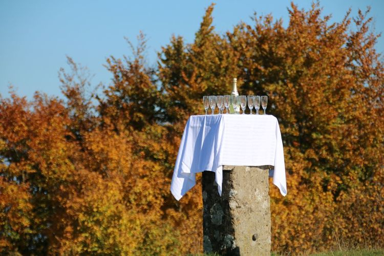 Not for me😭Champagne Reception Outdoor Reception Reception Champagne Glasses Champagne Bottle Stone White Tablecloth Autumn Tree Beauty In Nature Sky Outdoors Nature Day No People EyeEmNewHere Crafted Beauty Colour Your Horizn Focus On The Story The Still Life Photographer - 2018 EyeEm Awards 10 A New Beginning