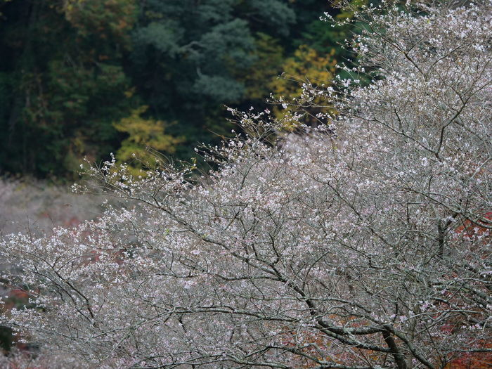 Tree Plant Growth Beauty In Nature Nature Day No People Land Tranquility Forest Outdoors Flower Focus On Foreground Flowering Plant Branch High Angle View Close-up Freshness Selective Focus Non-urban Scene Cherry Blossom Lichen