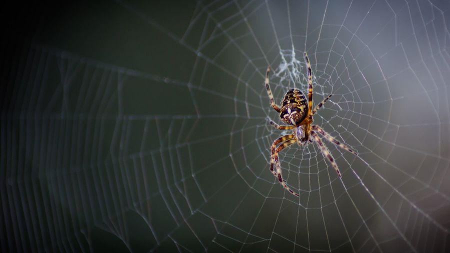 Spider Web Spider One Animal Animal Themes Survival Web Animals In The Wild Nature Animal Leg Focus On Foreground Animal Wildlife Insect Close-up Outdoors Fragility No People Full Length Day Beauty In Nature Pet Portraits