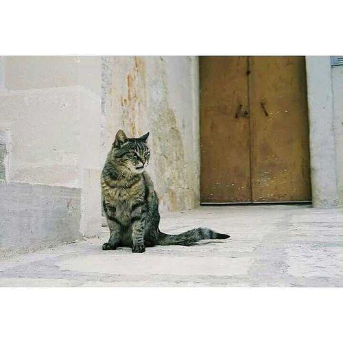 ねこ 猫 マテーラ イタリア 南イタリア Matera Italy Cats Cat