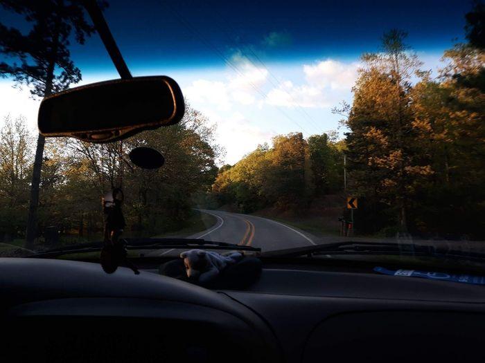 Tree Sunset Car