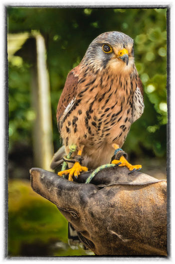 Animal Themes Animals In The Wild Beak Bird Bird Of Prey Close-up Focus On Foreground Full Length Hdr_Collection Ireland Ireland🍀 Looking Away Meath One Animal Outdoors Perching Tayto Park Wildlife Yellow