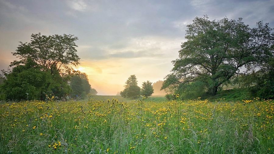 Photographer Picoftheday Photooftheday Naturephotography Plant Sky Tree Growth Cloud - Sky Nature Beauty In Nature Grass Green Color Field No People Land Tranquility Outdoors Scenics - Nature Tranquil Scene Park Flower Landscape Day