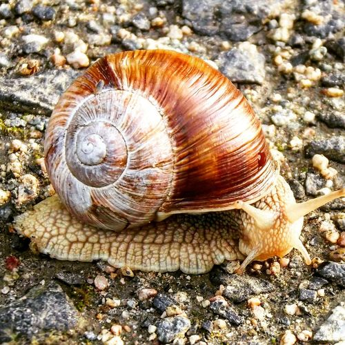 Snail One Animal Animal Shell Animal Themes Wildlife Animals In The Wild Gastropod Nature Close-up Outdoors Day No People Fragility