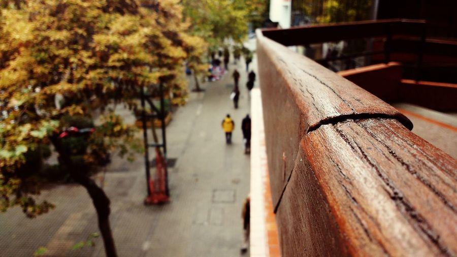 Streetphotography From My Point Of View Walking Around The City  Eeyem Photography Eye4photography  EyeEm Eyeem Streetphotography Photography Madera Vieja Madera De Roble Madera Arboles Invierno Grietas Otoño Otoño 🍁