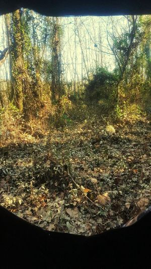 From the ground blind. at PD River part of Yadkin River. Relaxing Hunting Huntingphoto Huntingseason Outdoors Nature Nature_perfection