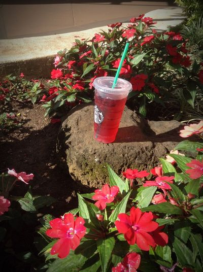 An awesome way to start a morning with my favorite very berry hibiscus refresher from starbucks Starbucks Kukui Grove